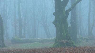 'The Cloud' vs 'The Fog'